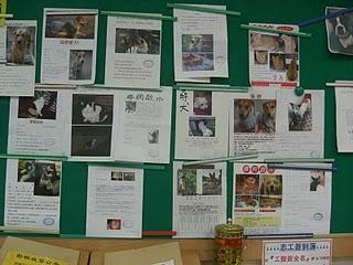 動物之家的布告欄上貼滿尋狗啟事。陳郁雯/攝影